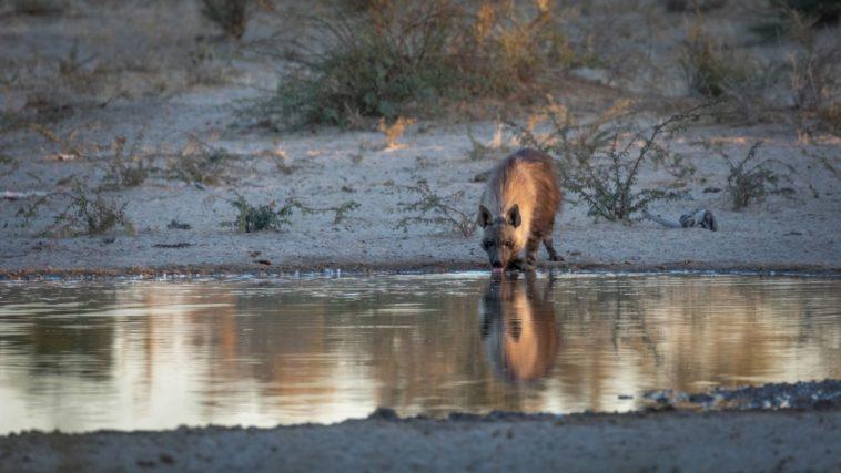 Wildlife Volunteer South Africa